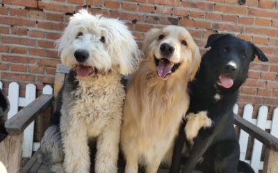 8 Things Your Dog Needs: Part 4 – Socialization