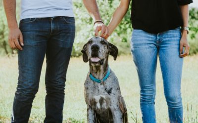 8 Things Your Dog Needs: Part 8 – Learning How To Learn