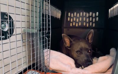Chateau Academy: Crate Training Your Dog