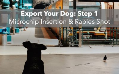 Export Your Dog: Step 1 – Microchip Insertion & Rabies Shot