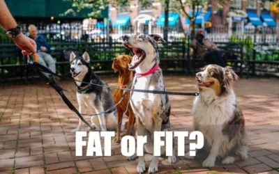 Is your dog fat, fit or needs to pork up a bit?