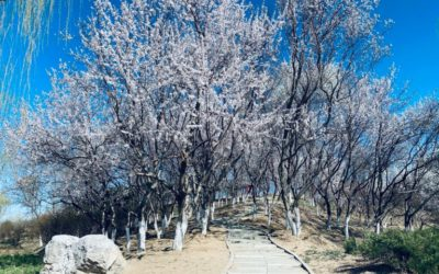 Out & About: Chaobai River Park