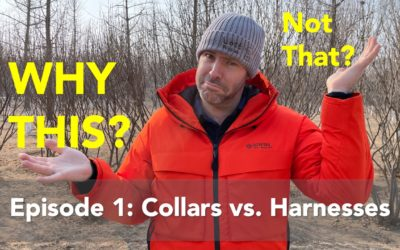 Why This & Not That: Collars vs Harnesses