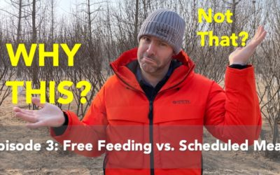 Why This & Not That: Free Feeding vs. Scheduled Meals