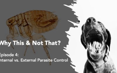 Why This & Not That: Internal vs External Parasite Control